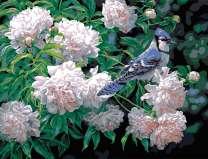 Птица в цветах пионах
