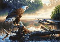 Недовольный орел