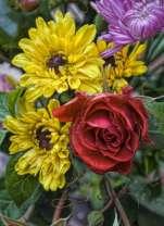 Якро-выразительные цветы